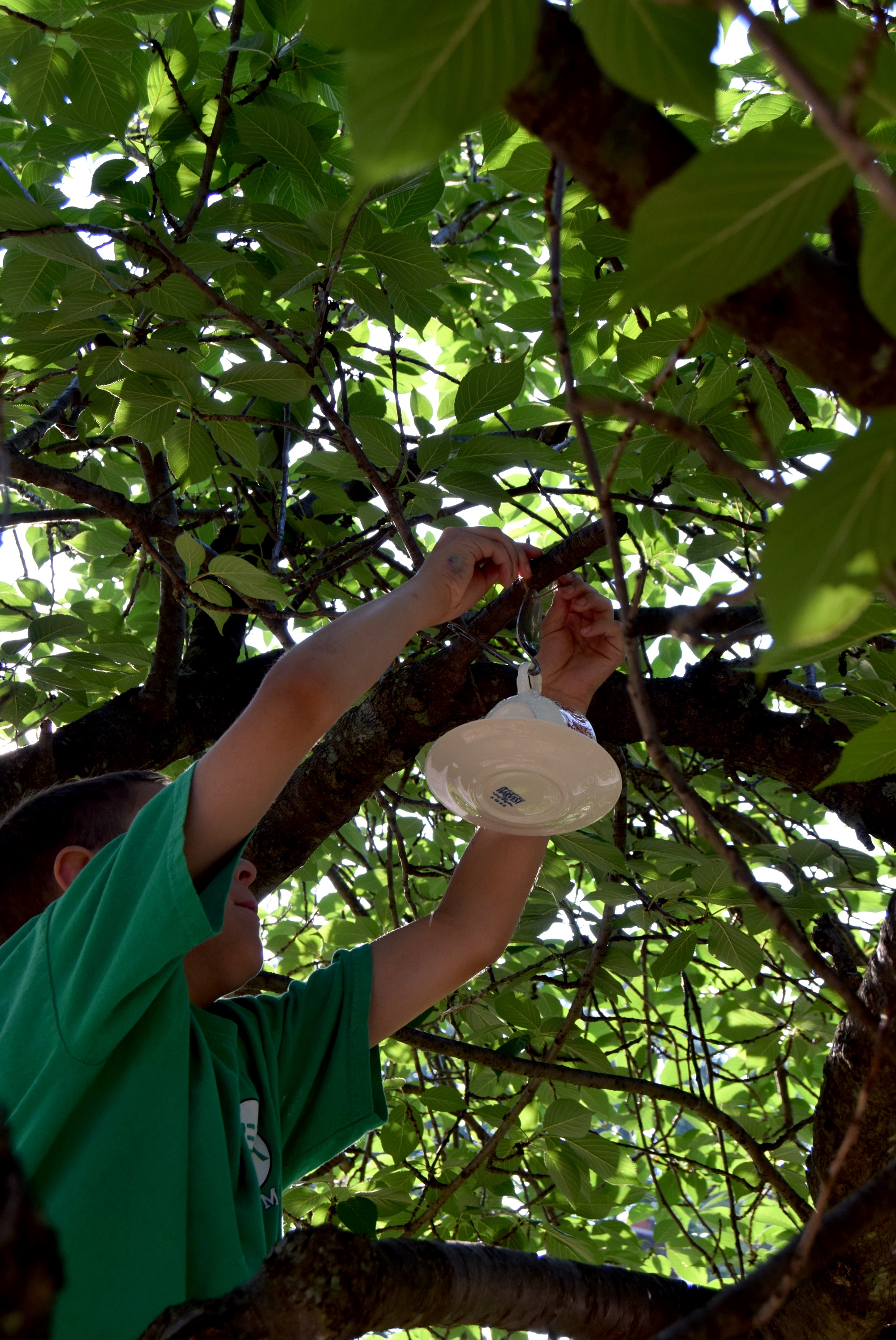 hanging the finished bird feeder from a tree