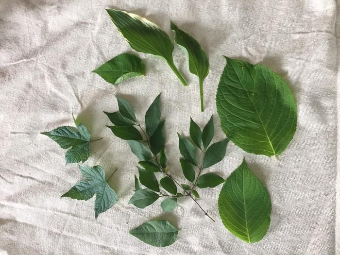 Tim's leaves used as stencils.