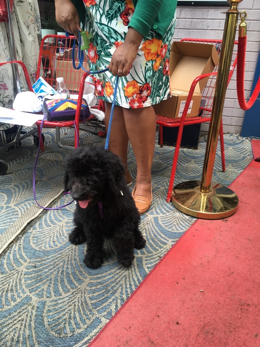 Mush hangs out during vintage pop-up shop at Sun Cinema