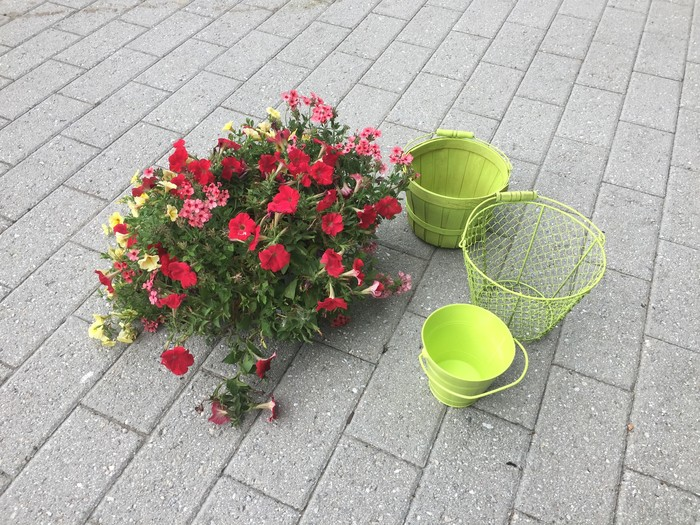 Tim's flowers and painted baskets.