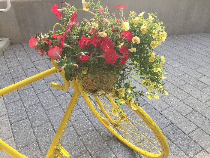 Tim displays the basket planter on his bicycle