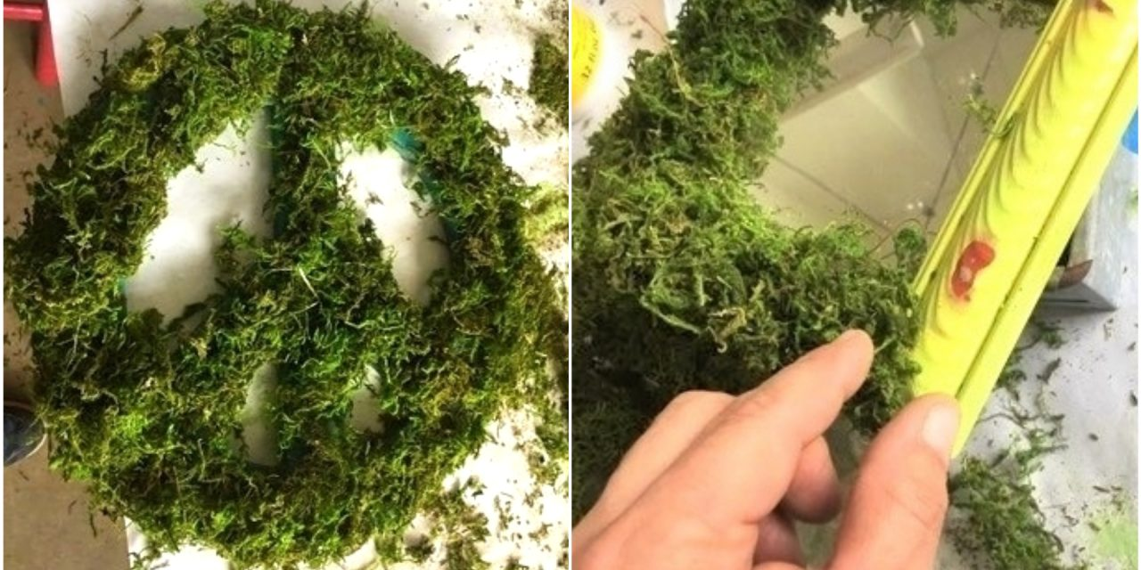 Mother Nature Makeover: Use Moss for Organic Transformations