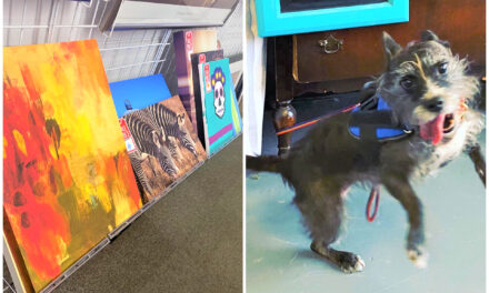 DIY: Paint Your Pooch Using Cast-Aside Canvas